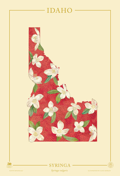 Idaho Native Botanicals Print