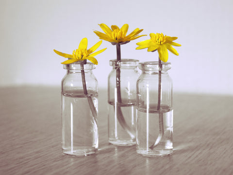 Yellow flowers in glass jars.