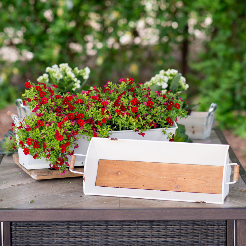 Metal Planters S/2 with Metal Frame and Wood Base
