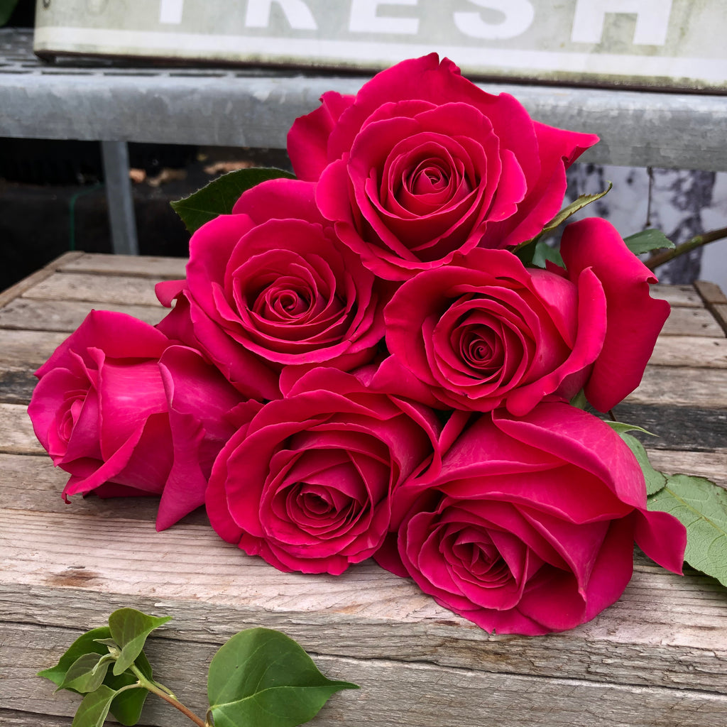 6 Rose Bundle