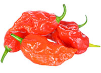 NAGA JOLOKIA (GHOST) PEPPERS