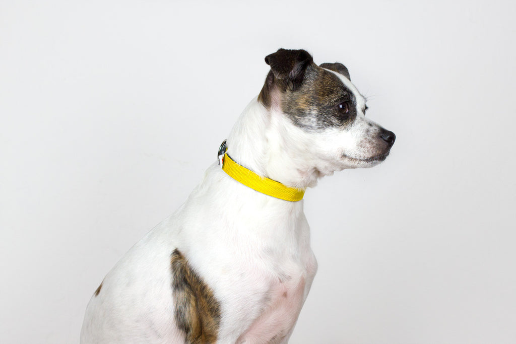 Funston Dog Collar / Yellow – Collar - 1