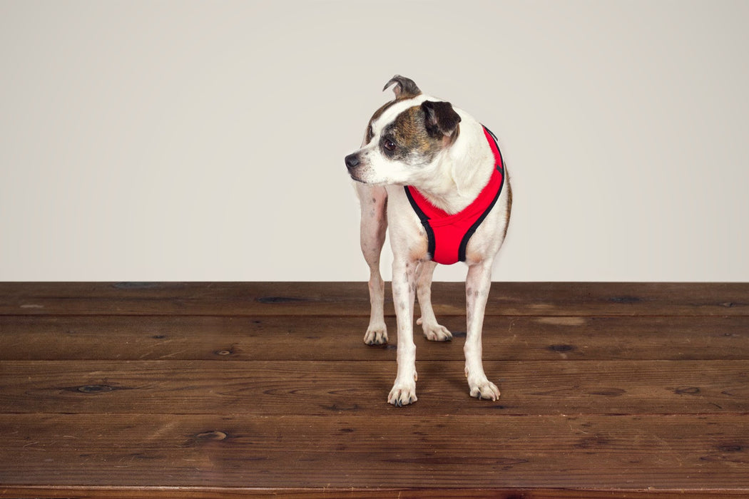 Laguna Soft Fit Dog Harness / Red - Wildebeest