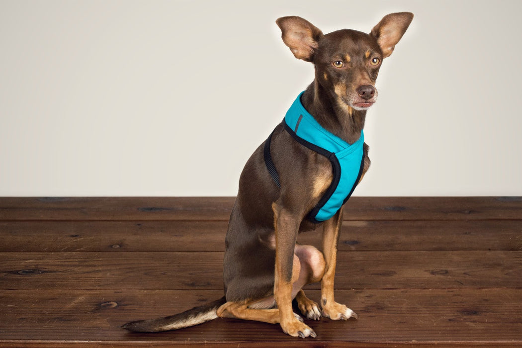 Laguna Soft Fit Dog Harness / Turquoise - Wildebeest