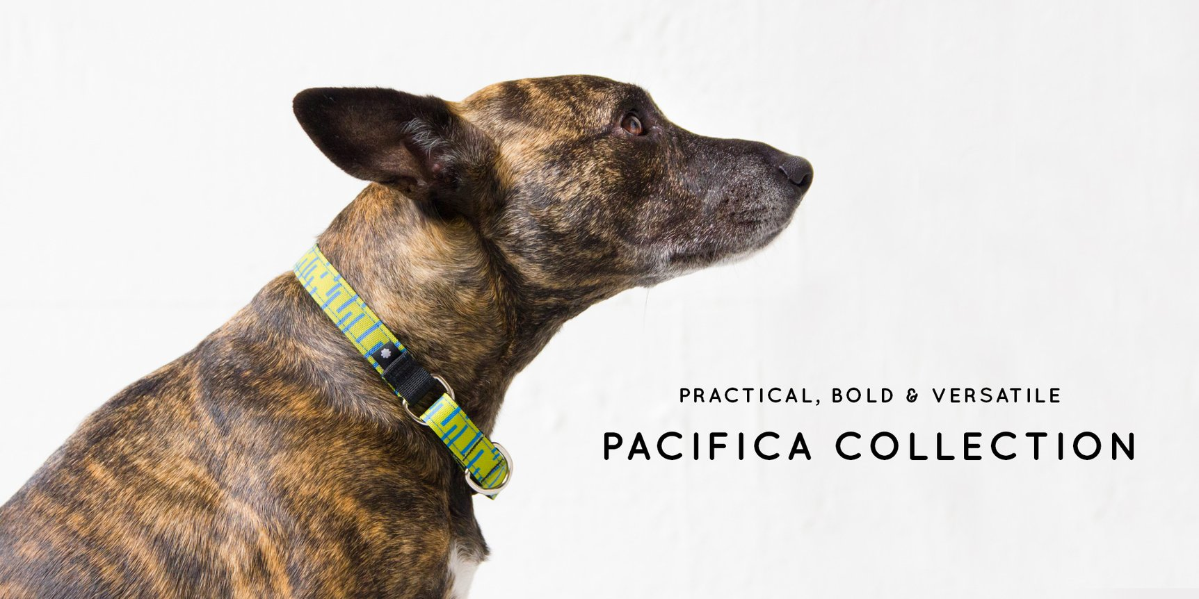 pacifica dog leash and collar