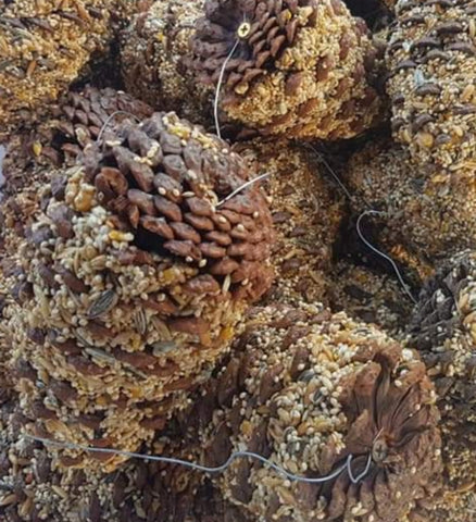 Small Parrot Seed Pine Cone