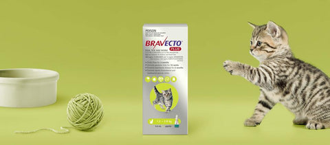 Bravecto Plus Spot On Small Cats 1-2kg