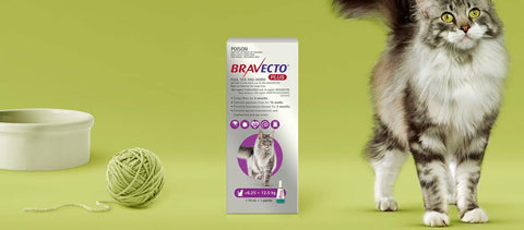 Bravecto Plus Spot On Large Cats 6-12kg
