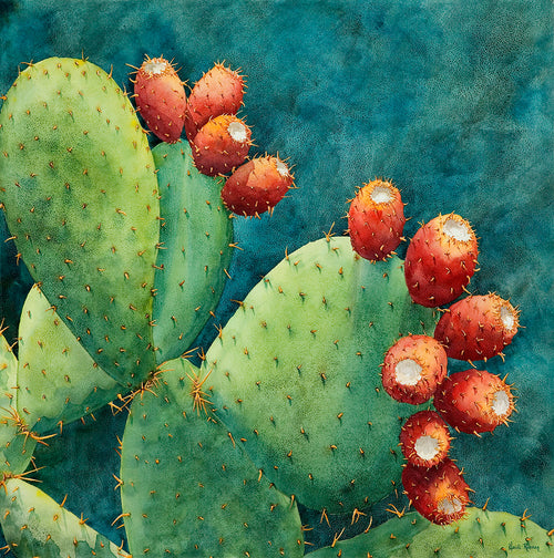 Fruit of the Opuntia
