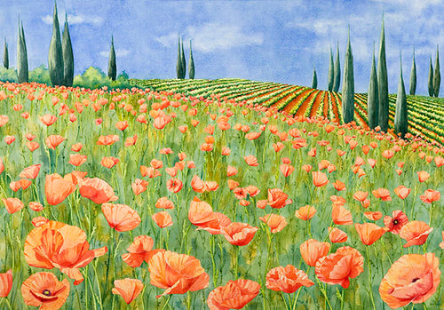 Springtime Poppies