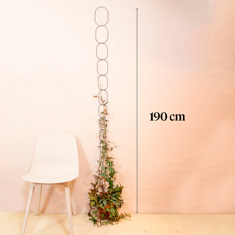 black climbing supports with plant growing upwards in front of pink wall beside a white chair. there is a line with arrows on both end and text to indicate the measurement of 190cm