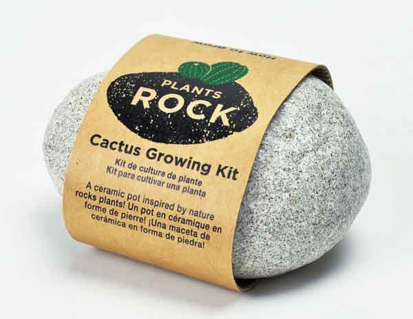 Plants Rock - Cactus Growing Kit