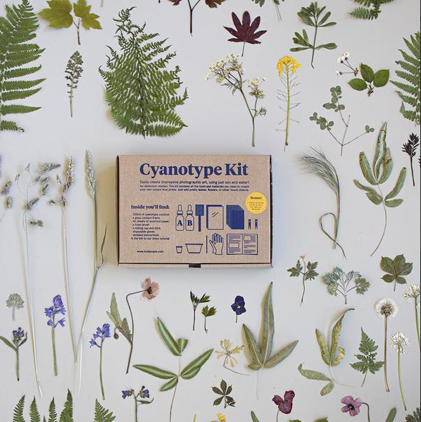 closed cyanotype kit box surrounded by dried flowers