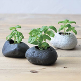 Plants Rock - Basil Growing Kit