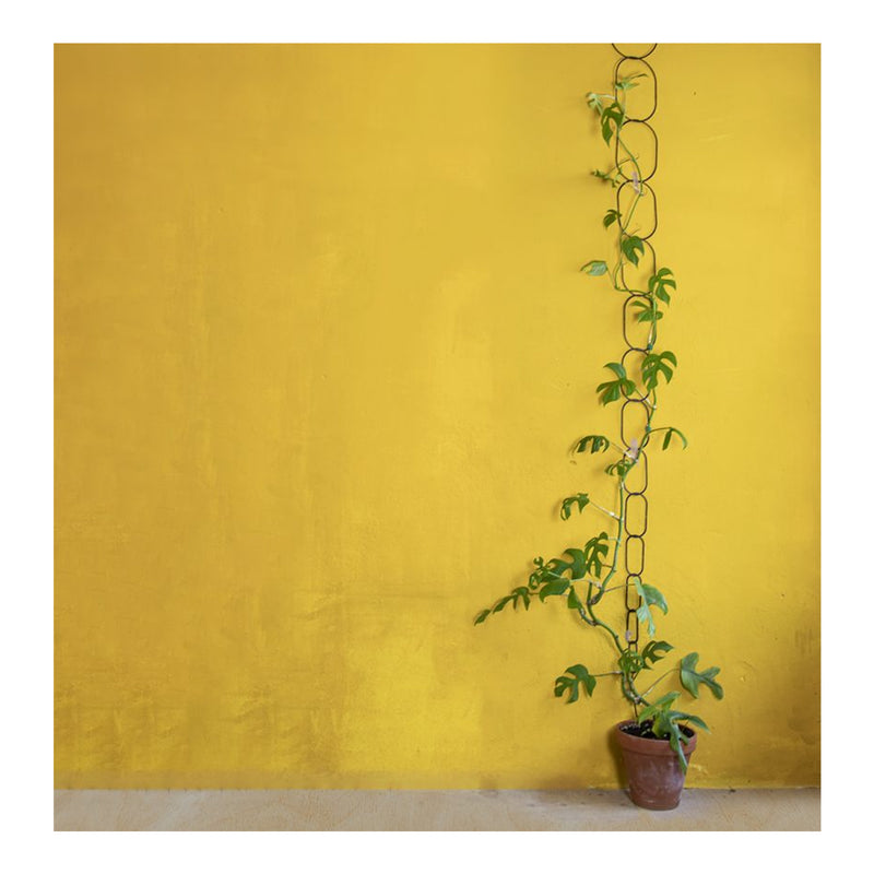 black climbing supports with plant growing upwards in front of yellow wall