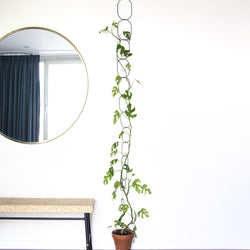 black climbing supports with plant growing upwards in front of white wall. there is also a mirror reflecting a window and curtain and a cork-topped table underneath