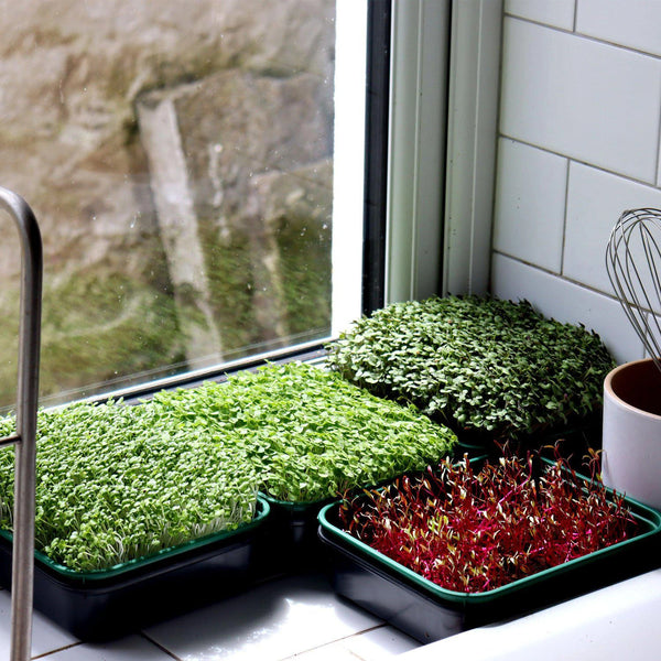 4 different trays of crops fully grown in a white window sill.