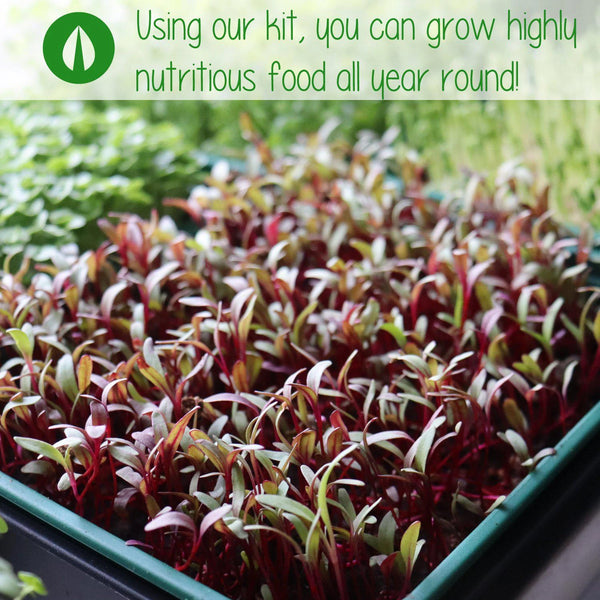 "close up image of crop growing with the nufield logo and text at the top reading ""using our kit, you can grow highly nutritious food all year round"""
