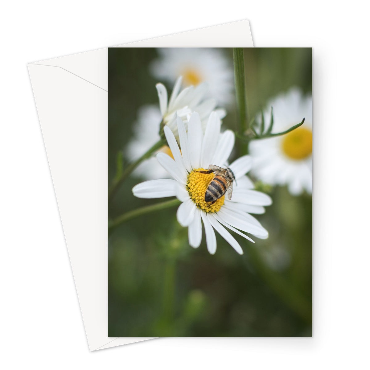 Busy Bee // Greeting Card