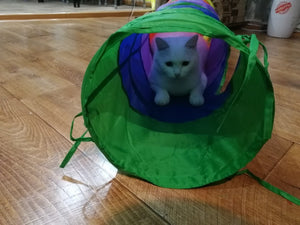Playful Cat Tunnels
