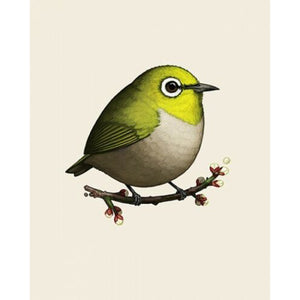 Mike Mitchell - Japanese White Eye Green Fat Bird