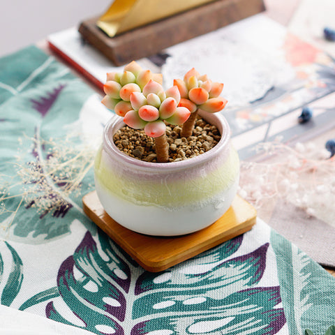 Small Ceramic Succulent Planter with Drainage Hole and Bamboo Tray/Saucer -- Percivale