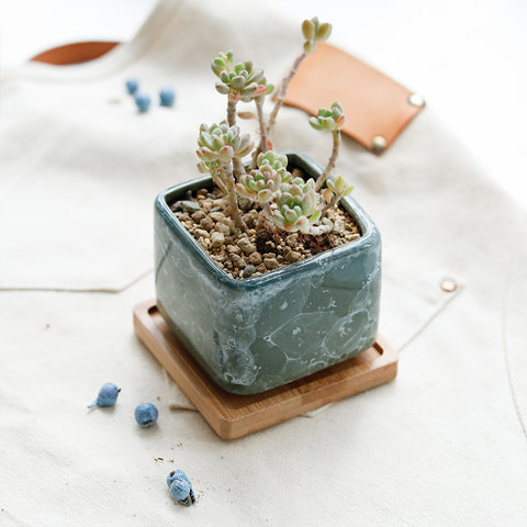 Small Ceramic Succulent Planter with Drainage Hole and Bamboo Tray/Saucer -- Early Spring