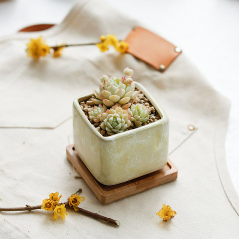 Small Ceramic Succulent Planters with Drainage Hole and Bamboo Tray/Saucer -- Early Spring