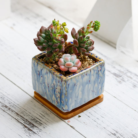 Small Ceramic Succulent Planter with Drainage Hole and Bamboo Tray/Saucer -- Glacier