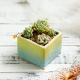 Ceramic Succulent Planters with Drainage Hole -- Starry Dreams