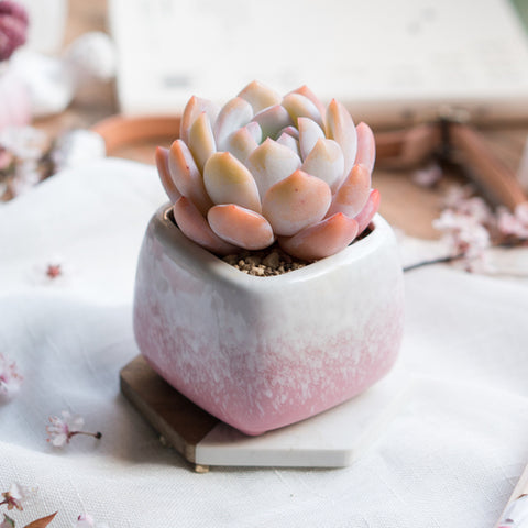 Small Ceramic Succulent Planter with Drainage Hole -- Cherry Blossoms