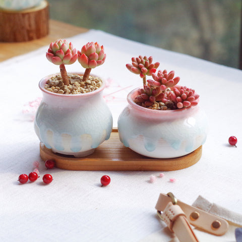 Set of 2 Ceramic Succulent Planters with Drainage Hole and Bamboo Tray/Saucer
