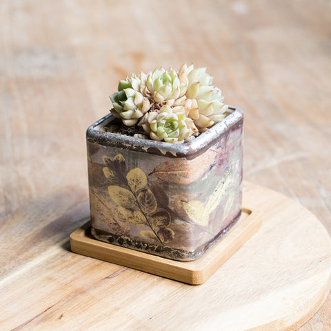 Small Ceramic Succulent Planter with Drainage Hole and Bamboo Tray/Saucer -- Kinaji