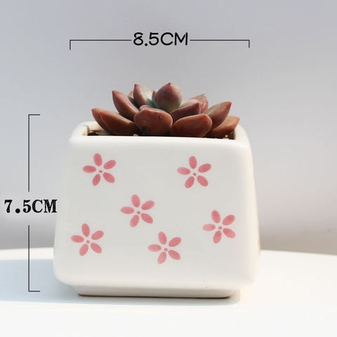 Small Ceramic Square Pink Succulent Planter with Drainage Hole