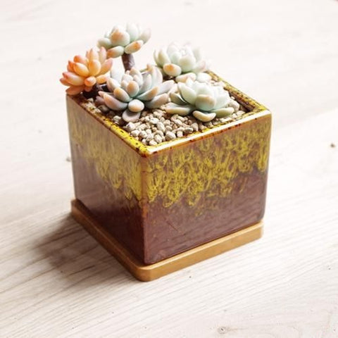Ceramic Succulent Planters with Drainage Hole and Bamboo Tray/Saucer -- Five Seasons Bright Sun