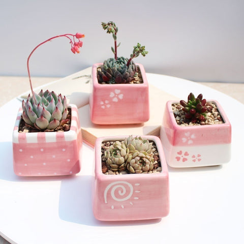Random Set of 4 Small Ceramic Square Pink Succulent Planters with Drainage Hole