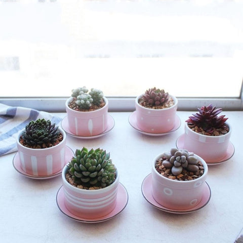 Set of 6 Small Ceramic Pink Tea Cup Succulent Planters with Drainage Hole and Saucers