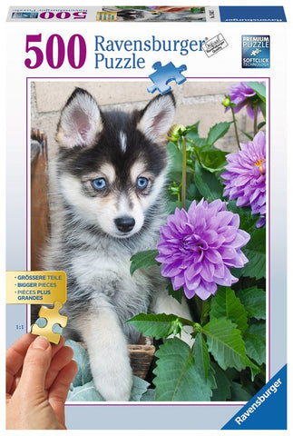 Ravensburger: Cute Husky - 500pc Puzzle - The Board Gamer