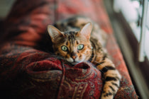 Cat photo by Caleb Woods