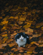 Cat photo by Omid Armin