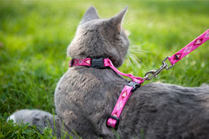 "Lupine 1/2"" H-Style Cat Harness 9""-14"""