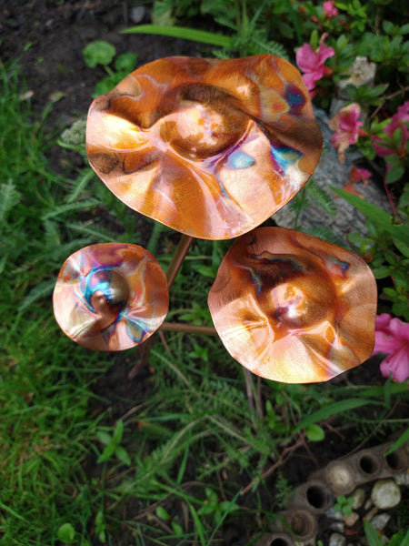 Copper toadstools