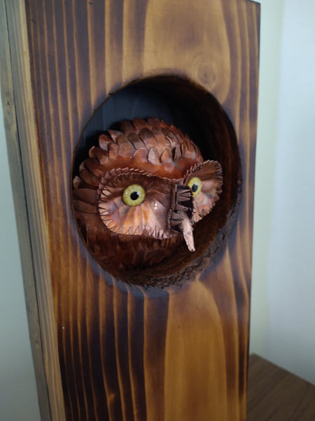 Little owl peeking out of hole in wood