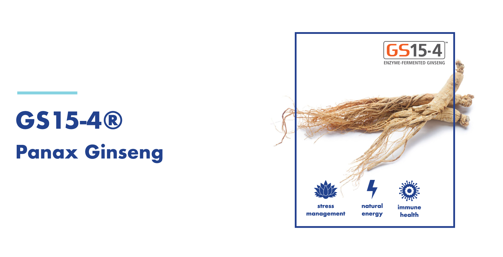 WorkWellness Ingredients - GS15-4 Ginseng