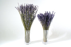 "Dried Lavender packages 20"" Stems"