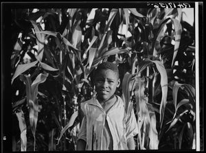 Young boy in the corn Poster - World War Era