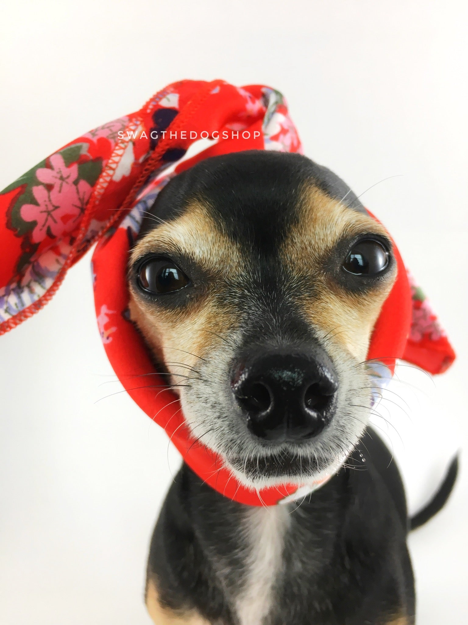 Red Wild Flowers Swagdana Scarf - Bust of Cute Chihuahua Wearing Swagdana Scarf as Headband. Dog Bandana. Dog Scarf.