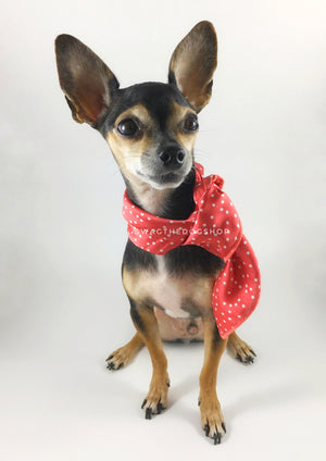 Polka Itty Bitty Coral Swagdana Scarf - Full Frontal View of Cute Chihuahua Wearing Swagdana Scarf as Neckerchief. Dog Bandana. Dog Scarf.