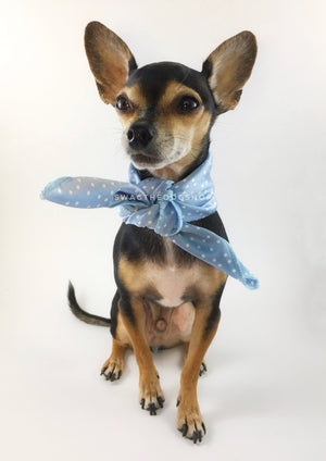 Polka Itty Bitty Powder Blue Swagdana Scarf - Full Frontal View of Cute Chihuahua Wearing Swagdana Scarf as Neck Scarf. Dog Bandana. Dog Scarf.