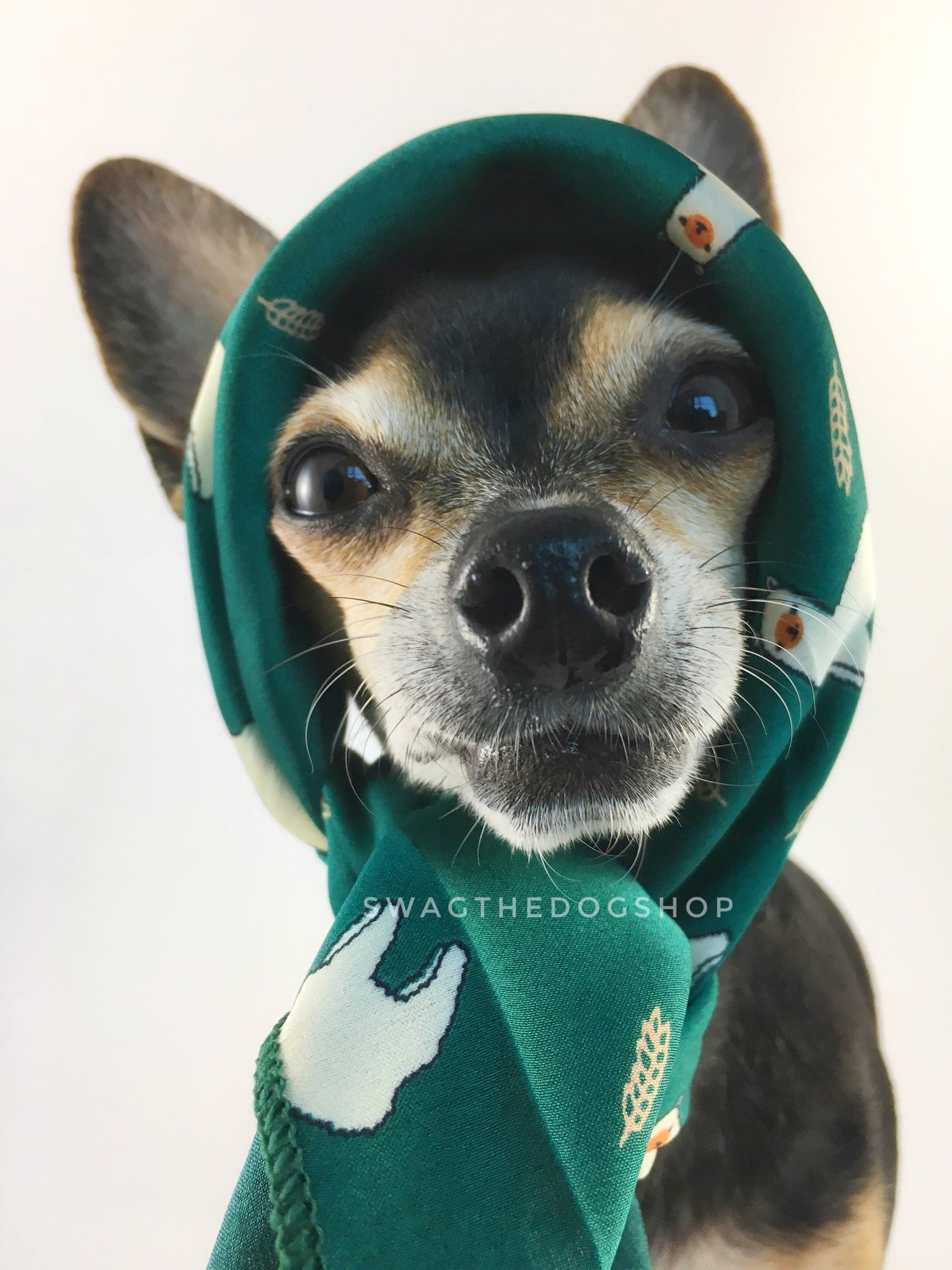 Lorenzo Llama Green Swagdana Scarf - Bust of Cute Chihuahua Wearing Swagdana Scarf as Headscarf. Dog Bandana. Dog Scarf.